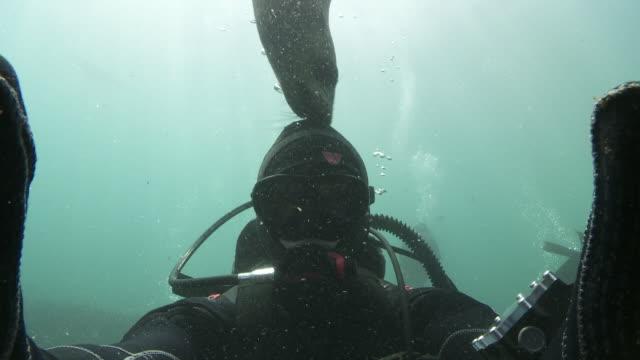 Brown Fur seal biting diver's hood