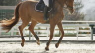 SLO MO TS Horse galloping in sunny arena with rider
