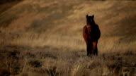 Brown Horse Grazing in Field