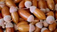 Brown shiny acorns
