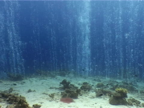 Bubble curtain emanating from seabed, Canyon' dive site near Dahab, Red Sea