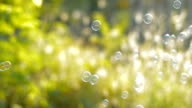 bubbles on green grass background