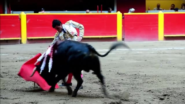 Budding Colombian bullfighter Juan De Castilla learnt the sport thanks to a patronage by renowned painter Fernando Botero
