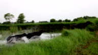 Buffalo running in nature
