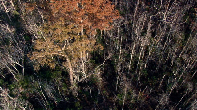Bull Neck Swamp Research Forest  - Aerial View - North Carolina,  Washington County,  United States