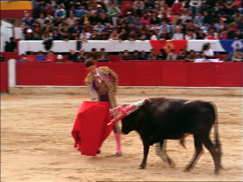 Bull with banderillas in neck charging + circling matador with red cape / Bogota, Colombia