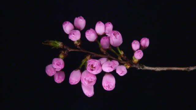 Bund der Blumen Bloomig im Zeitraffer