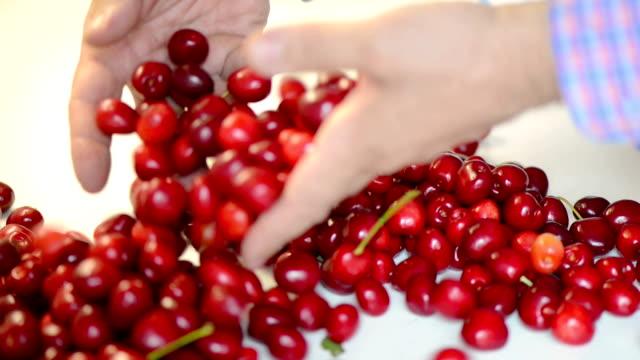 bunch of ripe red cherries