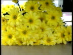 Bunches of daisies on conveyor belts moving towards camera then moved by mechanical arm England