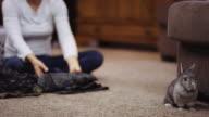 Hase auf Boden sitzend, während Besitzer Kleidung Falten