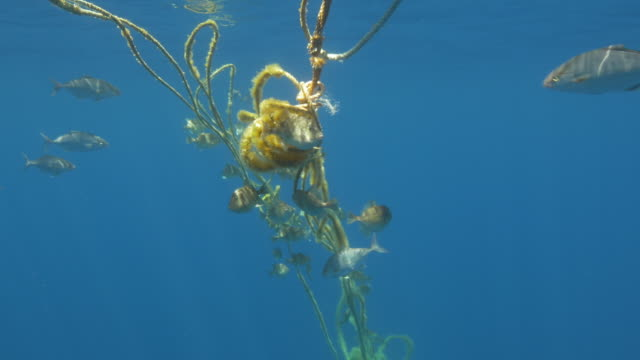 Buoy and ropes with fish life