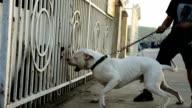 burking dog