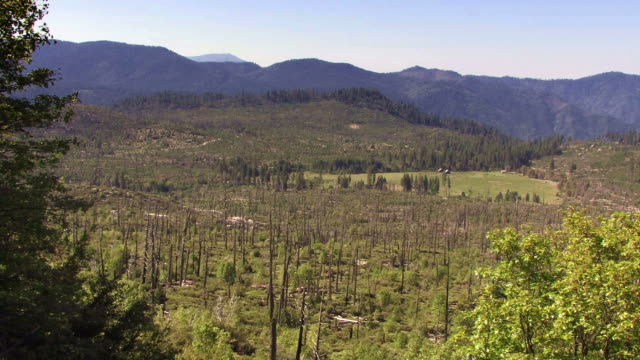 A burned out forest in California mountains.