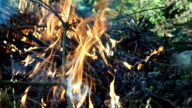 Burning flames in campfire VIDEO
