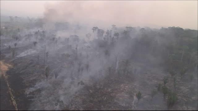 Burning trees  Wide Shot  Aerial Shot
