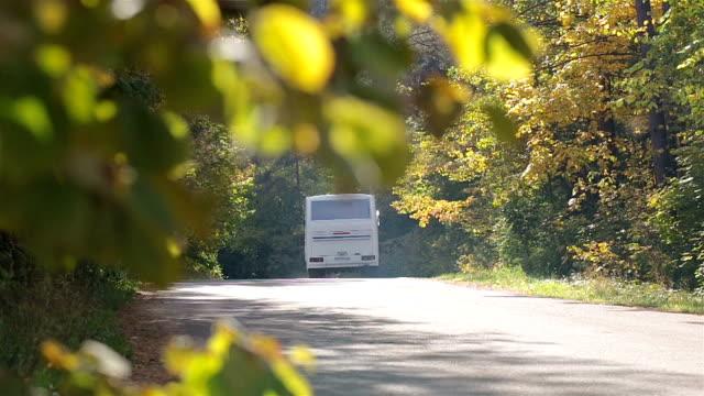 Bus- und LKW-fahren auf einer Straße in den Wald.