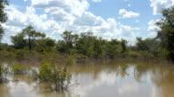 Bush under water