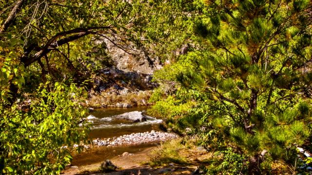 Scheinbeerensträuchern und den Fluss