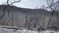 MS Bushland after bushfire / Melbourne, Victoria, Australia