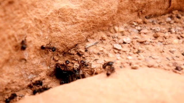 Busy Ant Colony