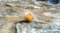 Butterflies are drinking mineral