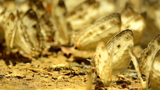 Schmetterlinge auf Boden in den Dschungel