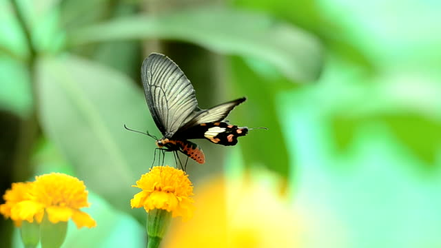 butterfly and flower symbiotic relationship