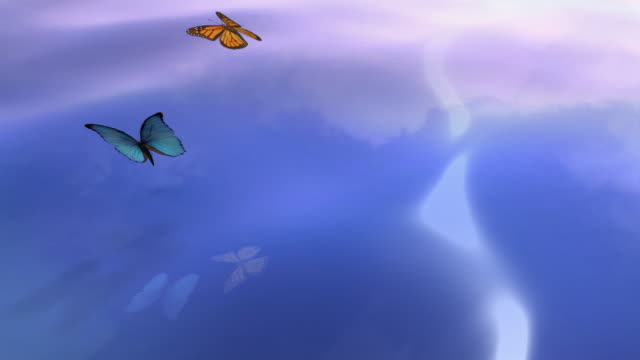 Butterflies flying over the water