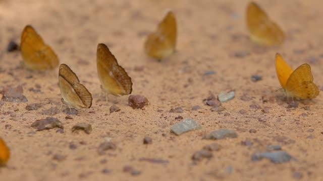 Schmetterlinge in der Natur.