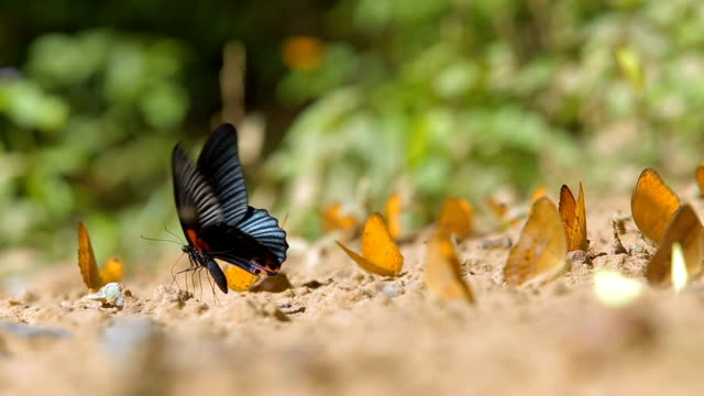 Butterflies in the nature.