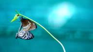 Farfalle di accoppiamento