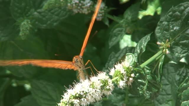 Butterfly 28 - HD 1080/60i
