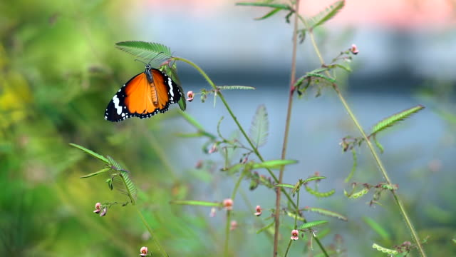 Butterfly and plants.