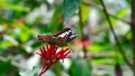 Schmetterling und rote Blume in Zeitlupe