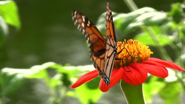 Schmetterling, Nahaufnahme