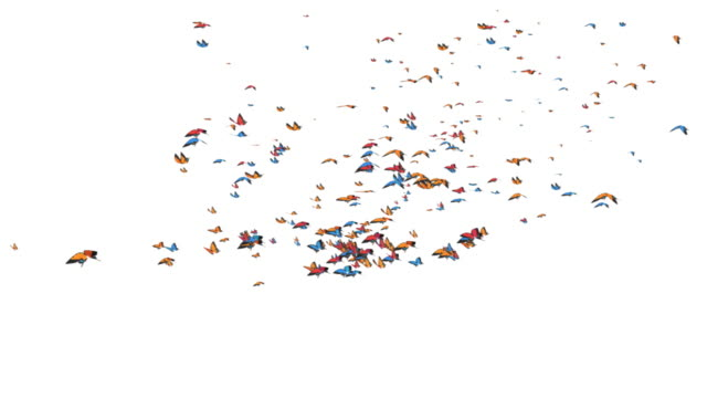 Vola farfalla colorata animazione HD