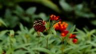 Schmetterling Tanz mit Blume