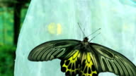 Butterfly eating pollen flower