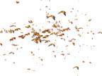 Animazione di diverse farfalle farfalla volante
