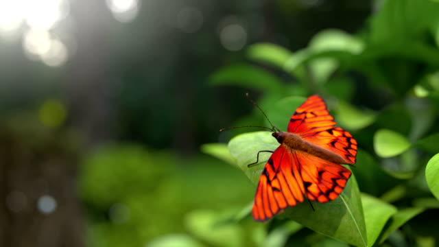 butterfly flying entfernt