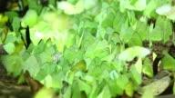 Butterfly ,HD