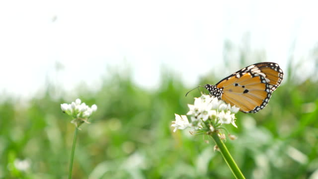 Butterfly in flower field