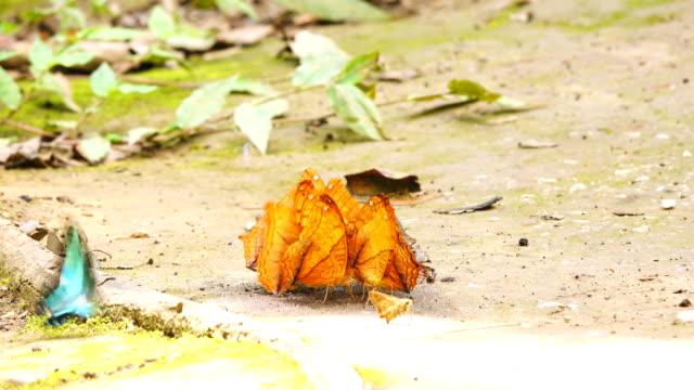 Schmetterling im Wald