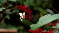 Schmetterling Herz Blume Zeitlupe erfassen
