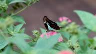 Schmetterling in Liebe mit Blume