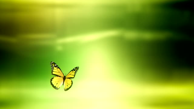 Butterfly landing with Luma / Alpha Matte (green) - Loop