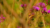 Butterfly lands on flower