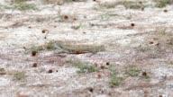 Butterfly lizard sand grass.