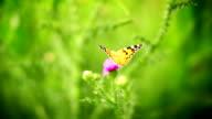 Farfalla su un fiore.