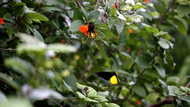 ฺButterfly auf einer Blume.
